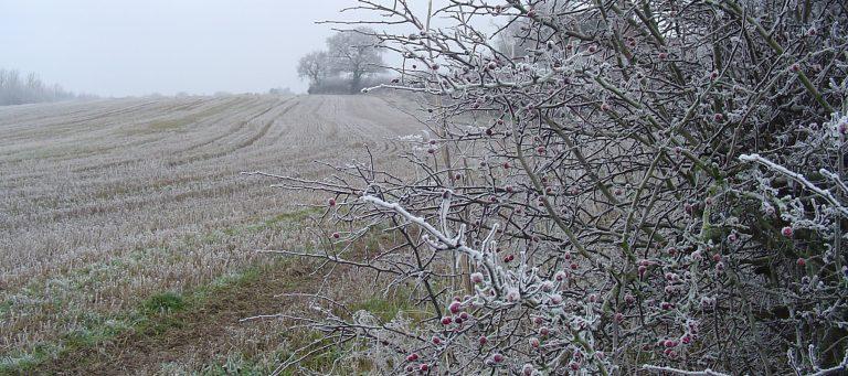 winter 011v2